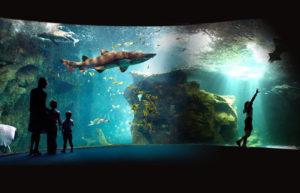 Aquarium de la Rochelle proche camping